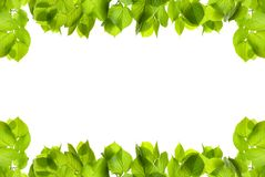 Frame of fresh green leaves with space for design. On white background stock image