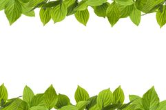 Frame of fresh green leaves with space for design. On white background royalty free stock image