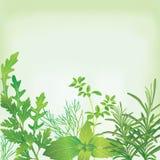 Frame of fresh herbs. Frame of fresh green herbs stock illustration