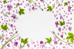 Frame of fresh lilac flowers and green hop leaves on white Royalty Free Stock Photos