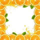 Frame of Fresh Oranges royalty free illustration