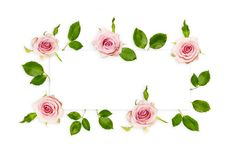 Frame with fresh pink roses and green leaves isolated on white, top view. Beautiful flowers background with empty space for text. Frame with fresh pink roses Royalty Free Stock Image