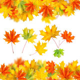 Frame From Autumn Leaves Isolated Stock Image