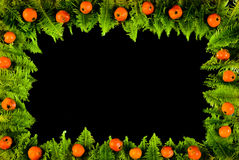 Frame From Moss And Berries Stock Photos