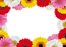 Frame full of Colorful Gerbera Flowers Royalty Free Stock Photos