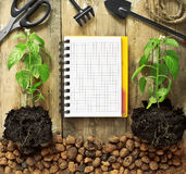 Frame with garden tools, seedlings and notepads. Royalty Free Stock Images