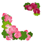 Frame of geranium flowers and leaves. Stock Photos