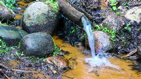 Ringing forest stream flowing down stream stock footage