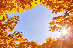 Frame of golden maple leaves in front of the blue sky Stock Photos