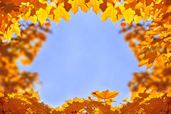 Frame of golden maple leaves in front of the blue sky Royalty Free Stock Photos