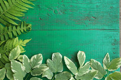 Frame from goutweed variegated and fern leaves on old painted tu. Rquoise wooden background with copy space. Border is left and bottom. Place for text. Top view Stock Photos
