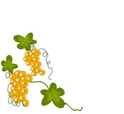 Frame grape. The illustration could be used to represent the brand of some wines, or as decoration for any other use Royalty Free Illustration