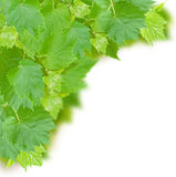 Frame of grape leaves Royalty Free Stock Images