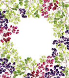 Frame of grape watercolor. Stock Images