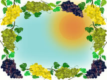 A frame of grapes against the background of a yellow sun Stock Photography