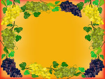 Frame of grapes on a bright orange background Royalty Free Stock Photos
