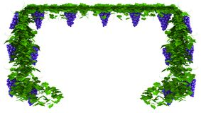 Frame from grapes. Frame of ripe bunches of blue grapes with leaves. 3D illustration Royalty Free Stock Photo