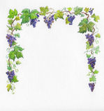 Frame grapes. Watercolor. Stock Photos