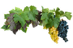 Frame with grapes Royalty Free Stock Photo