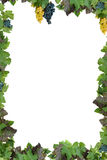 Frame with grapes Royalty Free Stock Images