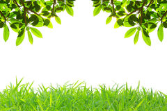 Frame of grass Stock Photography