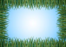 Frame from the grass . Stock Image