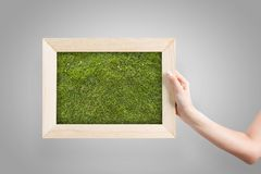 Frame with grass Royalty Free Stock Image