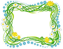 Frame with the grass and flowers Stock Images
