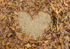 frame grass heart shaped of dry leaves on the ground Royalty Free Stock Photography