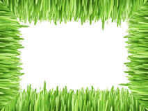 Frame with grass isolated on white background Royalty Free Stock Image