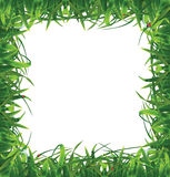 Frame of grass. Royalty Free Stock Photography
