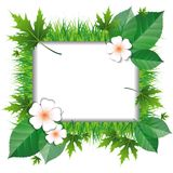 Frame of grass and leaves Royalty Free Stock Photo