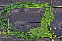 Frame of grass and plantain Royalty Free Stock Photos