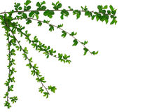 Frame of the green branches Royalty Free Stock Image