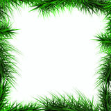 Frame, green branches of a Christmas tree on a white ba royalty free stock image