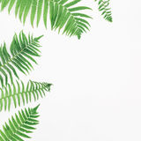 Frame of green fern leaves on white background, Flat lay, Top view Stock Images