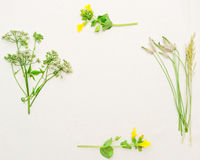 Frame of green field grass and yellow field flowers. On white background. Flat lay royalty free stock image