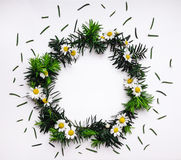 Frame of green fir branches and chamomile flowers on white background Stock Images