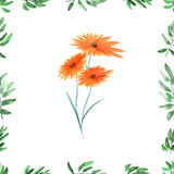 Frame with green foliage and orange wild flowers on a white background. Watercolor seamless pattern Stock Images
