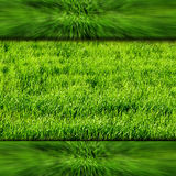 Frame with green and grass. As a background stock illustration