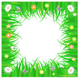 Frame of green grass and flowers Stock Image