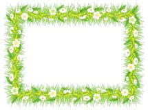 Frame with green grass flowers and leaves Royalty Free Stock Image