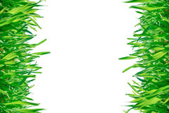 Frame of green grass isolated on a white background. Stock Photography
