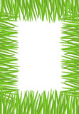 Frame of green grass. Natural  illustration with space for Stock Image