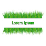 Frame with green grass on white background. Vector illustration Stock Photo