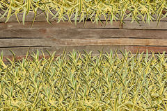 Frame of Green Grass on Wood Royalty Free Stock Photography