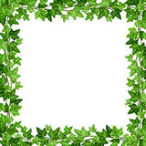 Frame with green ivy leaves. Vector illustration. Vector frame with green ivy leaves on a white background Royalty Free Stock Image