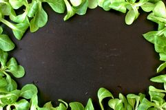 Frame from green lambs lettuce on the black background Stock Photography