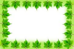 Frame green leaf Stock Photos