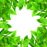 Frame from green leafs  Stock Photo